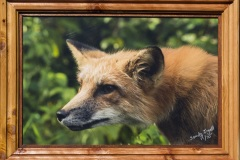 """ Red Fox Gazing"""
